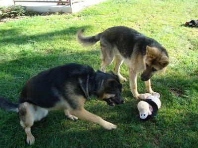 Shep and Kasha 1