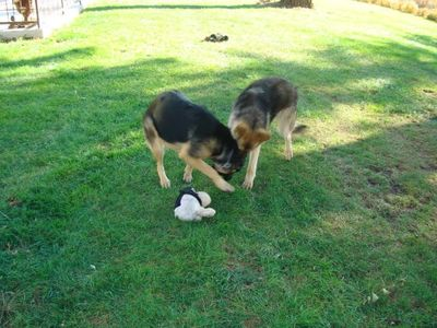 Shep and Kasha 5