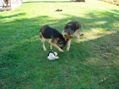 Shep and Kasha 5