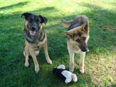Shep and Kasha 3