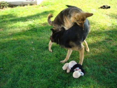 Shep and Kasha 4