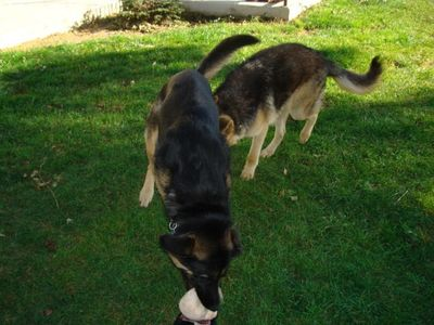 Shep and Kasha 7
