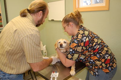 Goldie's last chemo