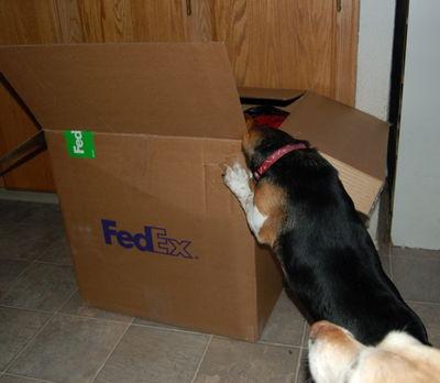 Widget in box