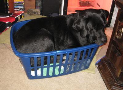 Luke in laundry basket