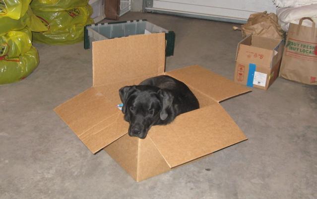 Luke in box