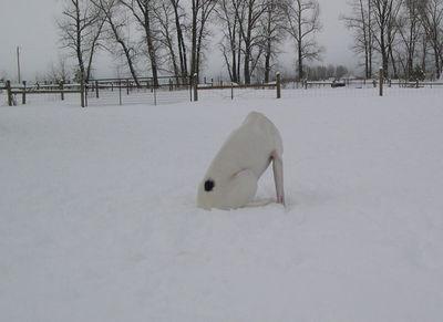 Blanca headless
