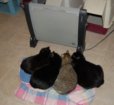 Cats in front of heater