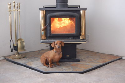 Daisy in front of wood stove