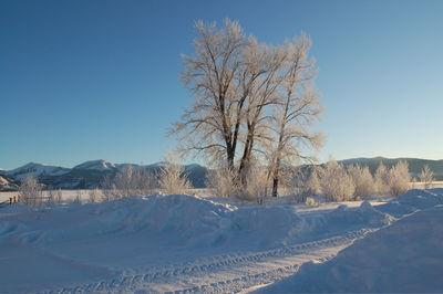 Winter scene 2 Feb 8