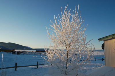 Winter scene 5 Feb 8