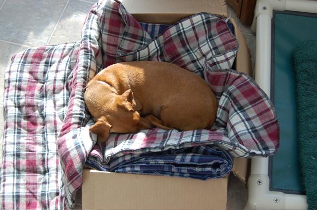 Daisy in blanket box