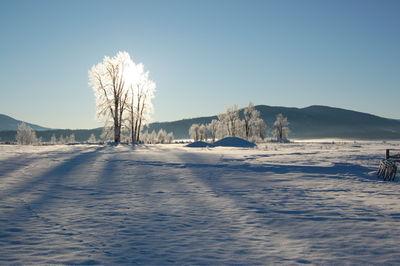 Tree with sun Feb 8