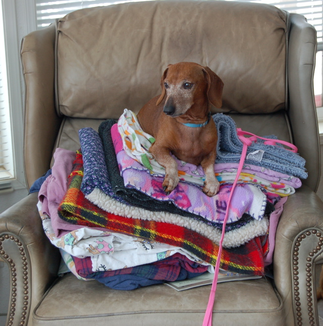 Dexter on bedding in chair