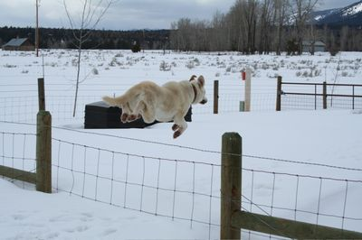 Travis leaping fence