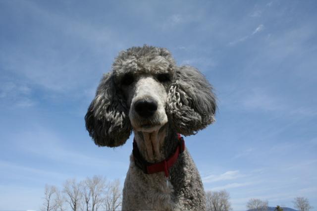 Molly ear muffs 1