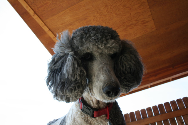 Molly ear muffs 4