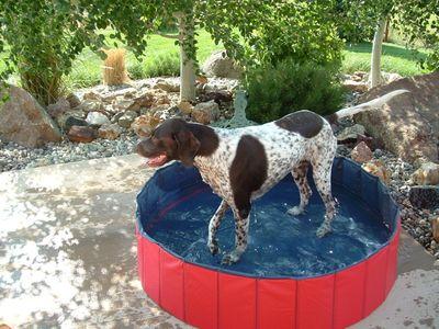 Jasper in pool