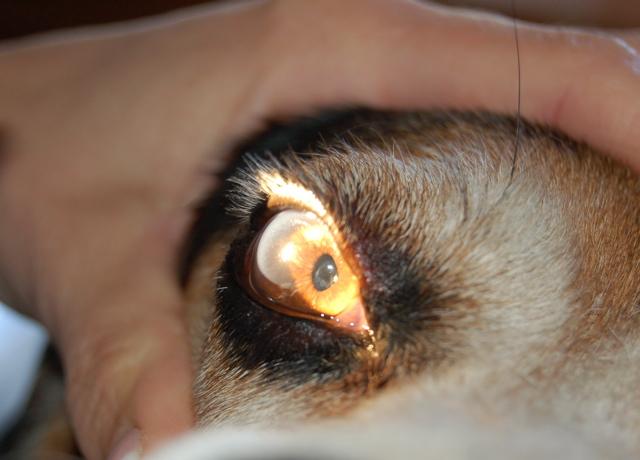Charlie eye check-up 3