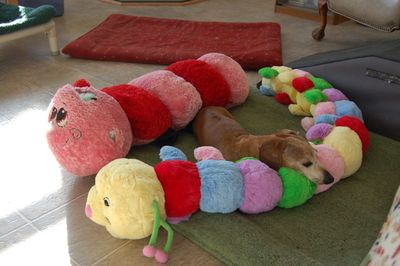 Bailey with new Mr Caterpillar 2