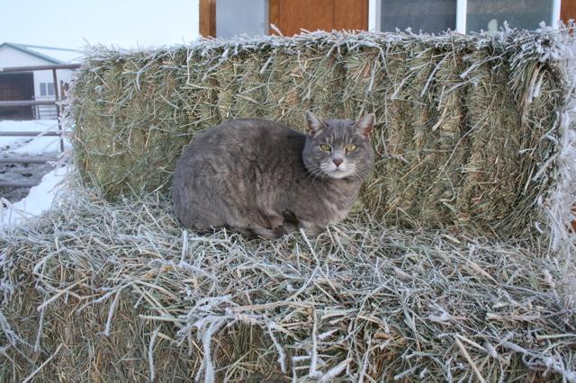 Skitter on hay bale