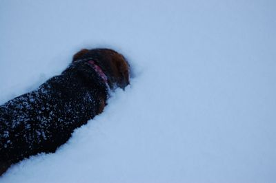 Widget in snow 5