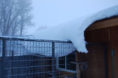 Snow on cat house roof 1