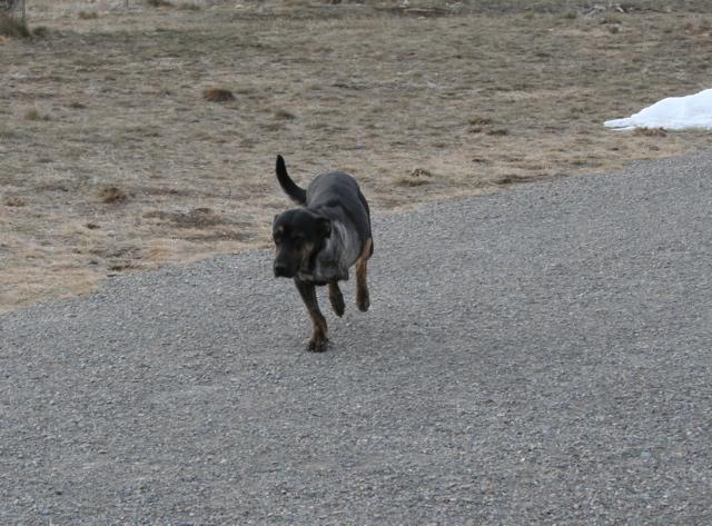 Timmy running
