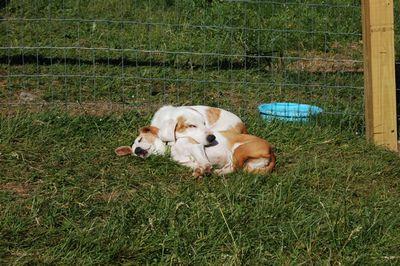 Spencer sleeping on Katie