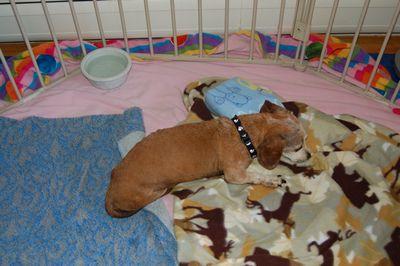 Bailey in pen July 15