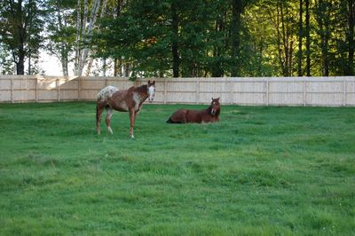 Bo and Rosie Grazing Aug 27