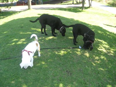 Kate's photo of Baron and friends