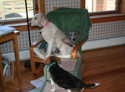 Molly and Pris in chair 2