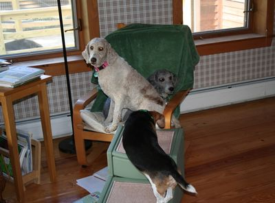 Molly and Pris in chair 3