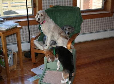 Molly and Pris in chair 4