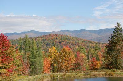 Trees in Fall 3