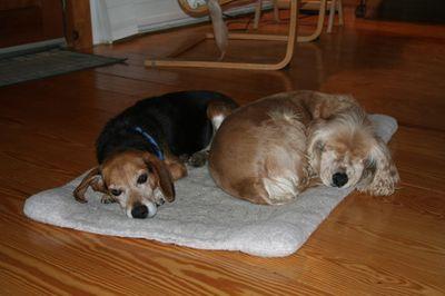 Suzi and Briggs sleeping