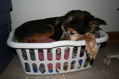 Gabe in a basket