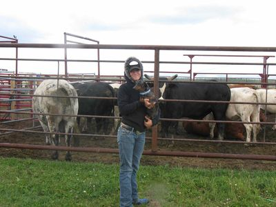 Twist and Chennell with cattle
