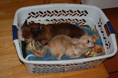 Dexter and Roo in basket
