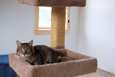 Molly in cat tree