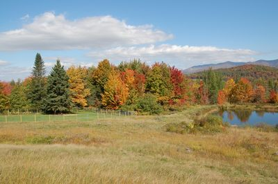 Trees in Fall 2