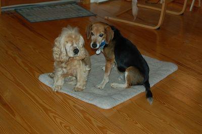 Suzi and Briggs