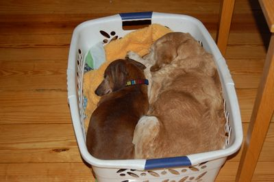 Goldie and Dexter in basket 2