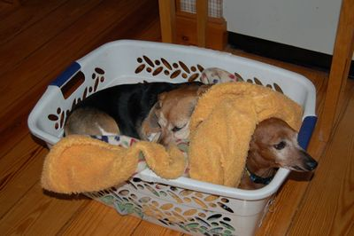Widget and Dexter in basket 3