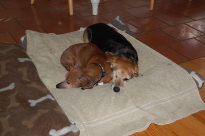 Widget and Dexter on bed