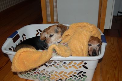Widget and Dexter in basket 2