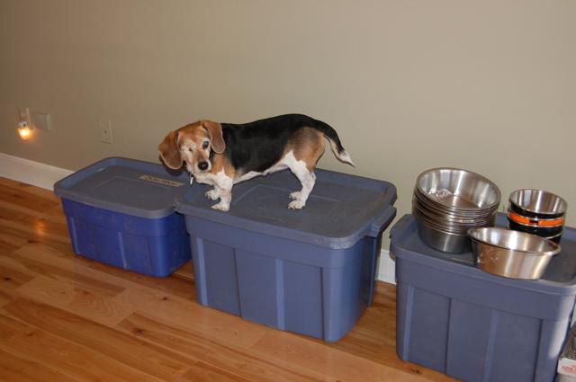 Widget on food tubs 2