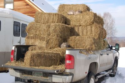 Smoke and Skitter on hay in truck