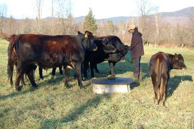 Alayne with herd